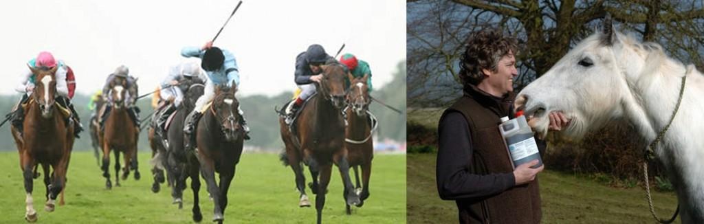 horseracing_jake